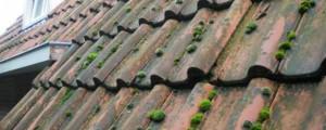dakreiniging mos