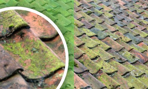 Algen van dak verwijderen